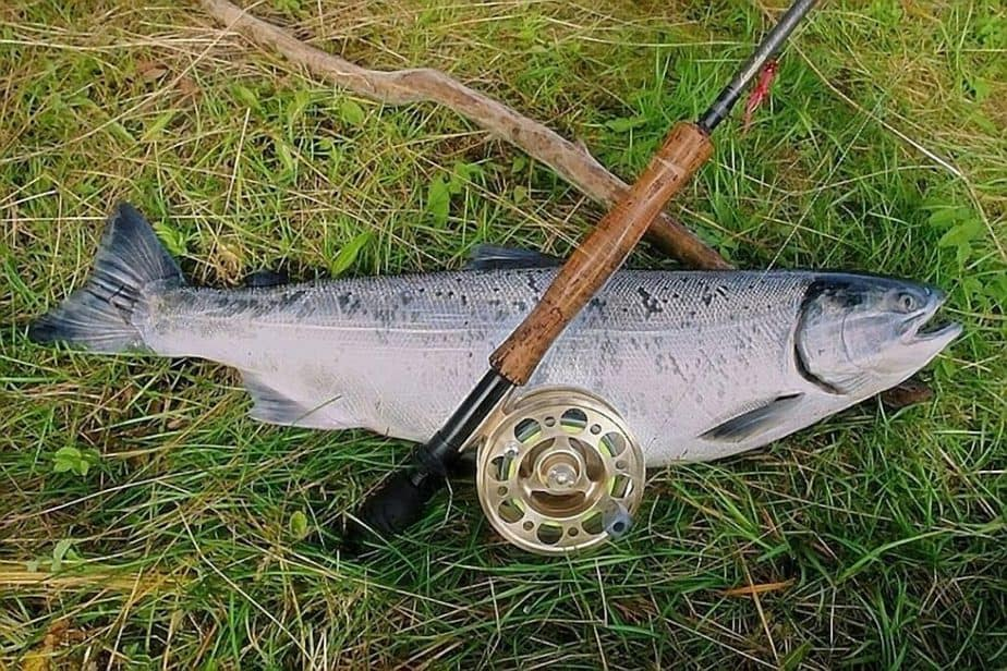 Best Salmon Rod and Reel Combo