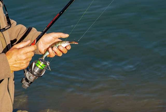 Light Weight Rod With Small Fish